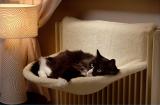 Ferribiella Cats Cradle легло за парно
