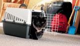 Savic Trotter Cat N: 1 транспортни чанти